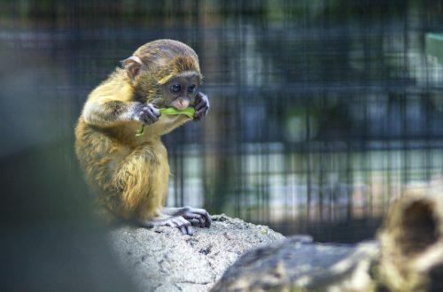 ostravská zoo