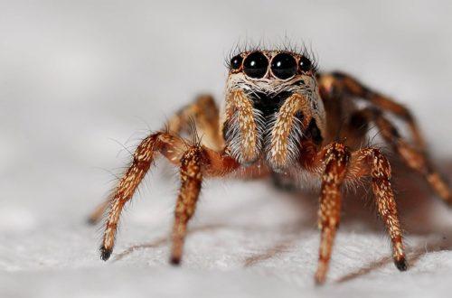 V pražské zoo žije největší český pavouk. Už jste ho viděli?