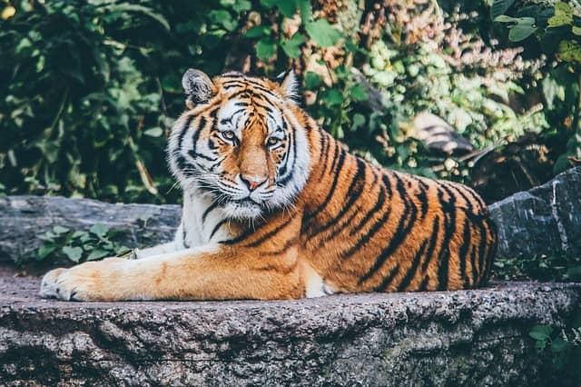Navštivte zoologickou zahradu v Brně také přes zimní období